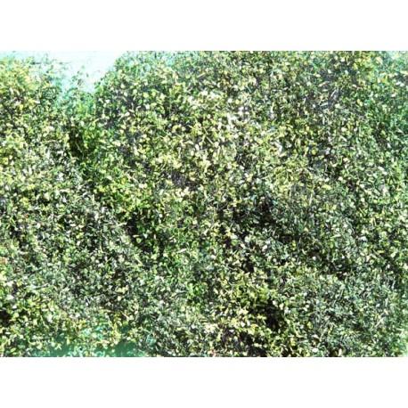 Feuillage vert foncé été pour buissons