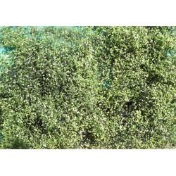 Feuillage vert moyen été pour buissons