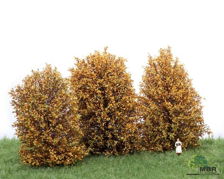Buissons hauts MBR